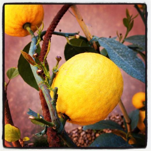 limoni giardino