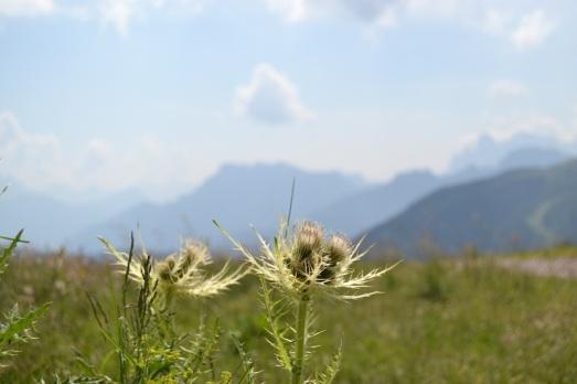 Costabella fiori