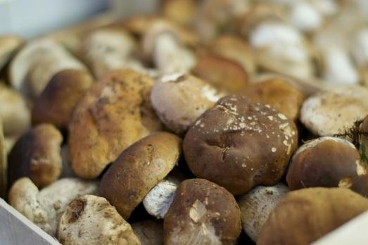 Funghi di Borgotaro IPG